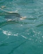 ATTO SECONDO. Alfredo fa il bagno nelle acque limpide di Capri.