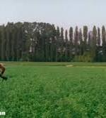 Il bambino corre via. //  TIGRE: Dove corri, Leonida?  //  LEONIDA: Voglio uccidere anch'io!