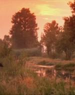 E' arrivato il tempo delle grandi irrigazioni. Tutta la pianura partecipa, notte dopo notte, a quel ben di Dio che viene a resuscitare le zolle riarse dall'estate.